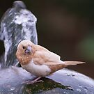 Thirsty Bird On Water Feature by JohnYoung