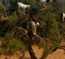 Goats up a tree Sticker