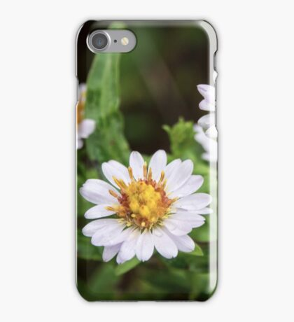 Late Beauty iPhone Case/Skin