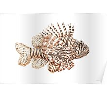Lionfish illustration, pen and ink Poster