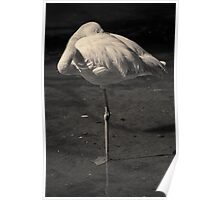 Flamingo I Toned Poster