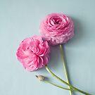 Ranunculus Love  by Nicola  Pearson