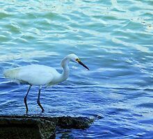 Egret and Blue water by Robert Brown