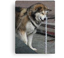 Playful Dog Canvas Print