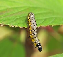 Caterpillar, caterpillar, crawl, crawl, crawl... by NaturesTouch
