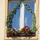 Lovely Window by karina5