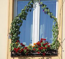 Lovely Window by karina5