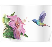 Hummingbird and Hibiscus Poster