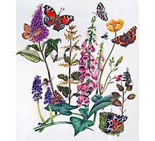 Butterflies and Buddleia Photographic Print