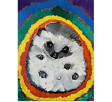 Hedgehog in a Rainbow Photographic Print