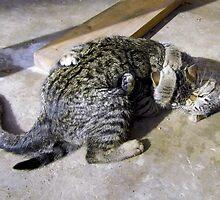 My Friends Kittens by WildestArt