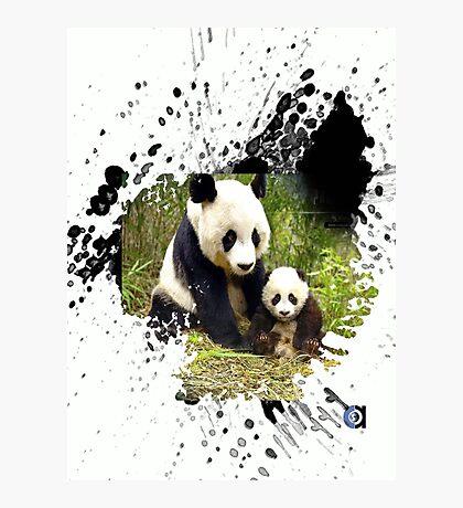 adorable pandas Photographic Print