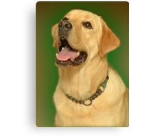 Yellow Lab. Canvas Print