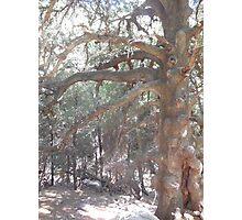 be tree Photographic Print