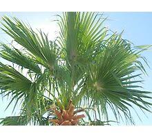 hummingbird & palm tree Photographic Print