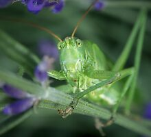 Grasshopper by LaniPix