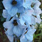 Blue Bell Flower by charmedy