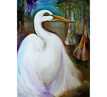 Egret in Cypress by Marcia Baldwin Photographic Print