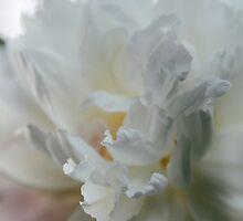 Peony Petals by AbigailJoy