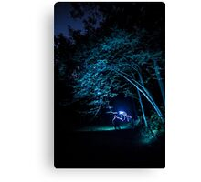 Arched tree with light paint Canvas Print