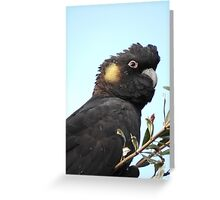 Yellow-tailed Black Cockatoo Greeting Card