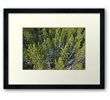 Above the Trees Framed Print
