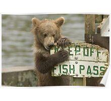 fish pass Poster