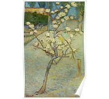 Vincent Van Gogh - Small Pear Tree In Blossom. Still life with flowers: flowers, blossom, nature, botanical, floral flora, wonderful flower, plants, cute plant for kitchen interior, garden, vase Poster