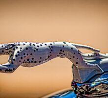 Dalmatian Radiator Cap Sticker