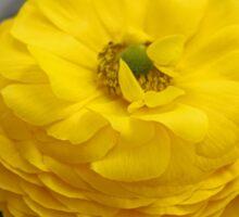 Yellow Begonia Sticker