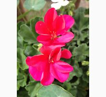 Beautiful red flowers Unisex T-Shirt
