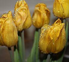 bright rain drop tulips by Joshua Fronczak