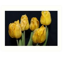 Dark yellow rain drop  tulips Art Print