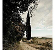 Tuscan Lane Photographic Print