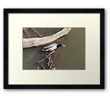 sneaky duck Framed Print