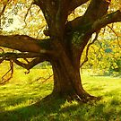 Autumn Colours of Myrtleford, Victoria, Australia by Michael Boniwell