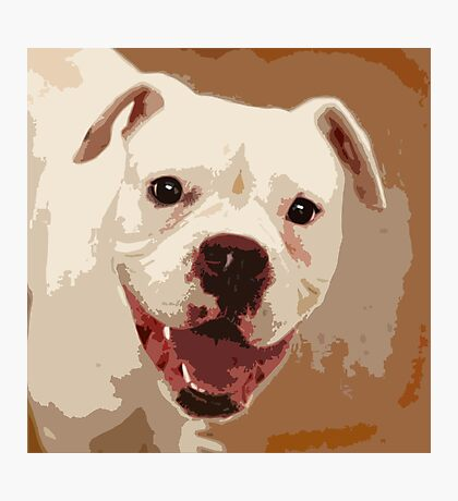 White Boxer Dog Photographic Print