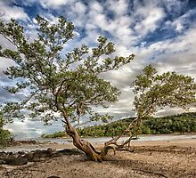 The Mangrove Tree by Kevin Hellon