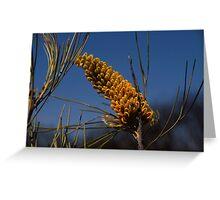 Yellow Grevillea Greeting Card