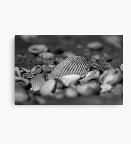 Shells (black and white version) Canvas Print