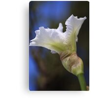 Iris White Canvas Print