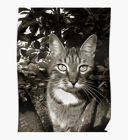 Mishu-Socks in black & white Poster