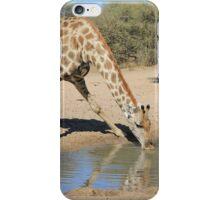 Giraffe - African Wildlife Background - Drinking Time iPhone Case/Skin