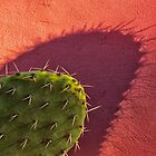 Colourful Cactus by photograham