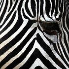Zebra Eye African Wildlife by Val  Brackenridge