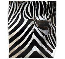 Zebra Eye African Wildlife Poster