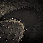 Colourful Cactus - Tin Type Style by photograham