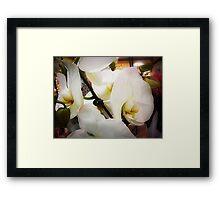 *White Orchid - Plaza* Framed Print