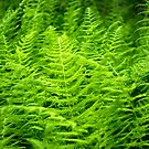 Young Fern by Martha Medford