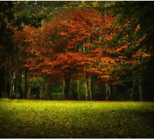 Autumn Colour Photographic Print